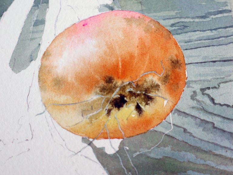 17-aquarelle-oignon