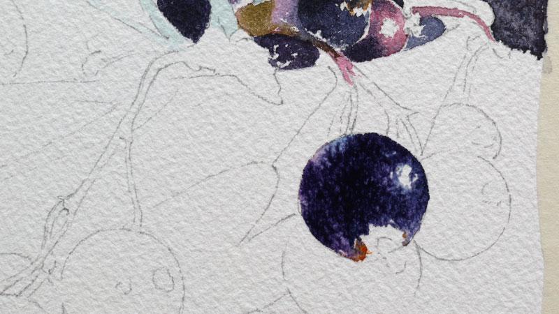 12-aquarelle-cassis-groseille