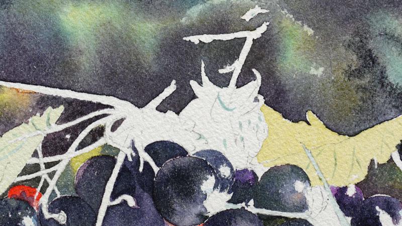 22-aquarelle-cassis-groseille