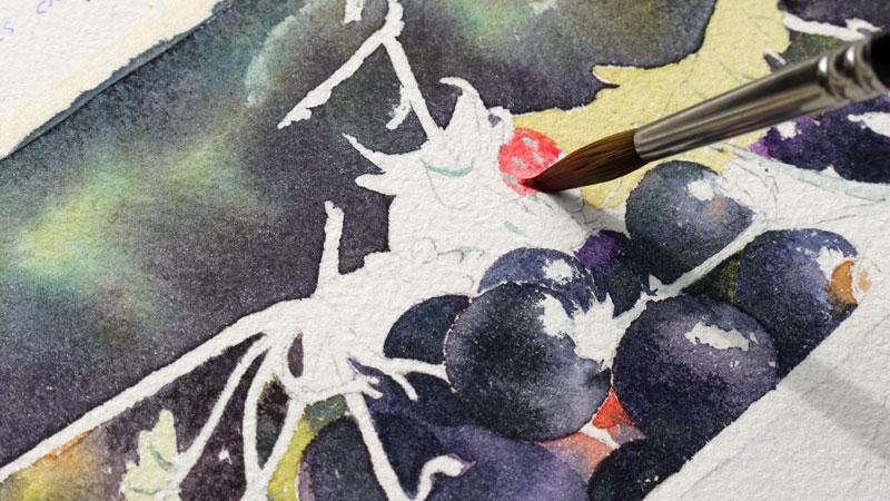23-aquarelle-cassis-groseille