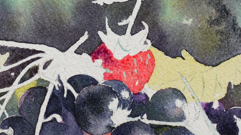 25-aquarelle-cassis-groseille